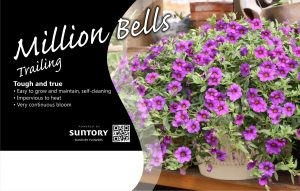 Million Bells Trailing