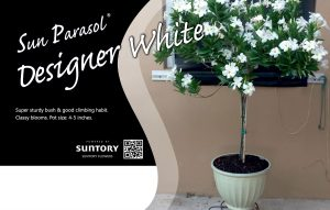 Sun Parasol Designer White