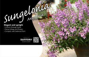 Sungelonia