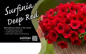 Surfinia Deep Red