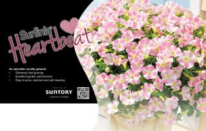 Surfinia Heartbeat