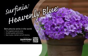 Surfinia Heavenly Blue