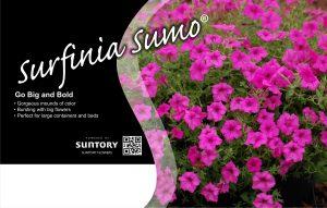 Surfinia Sumo