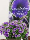 Petunia-Moonlight-Eclipse-Blue-with-Green-Edge-301