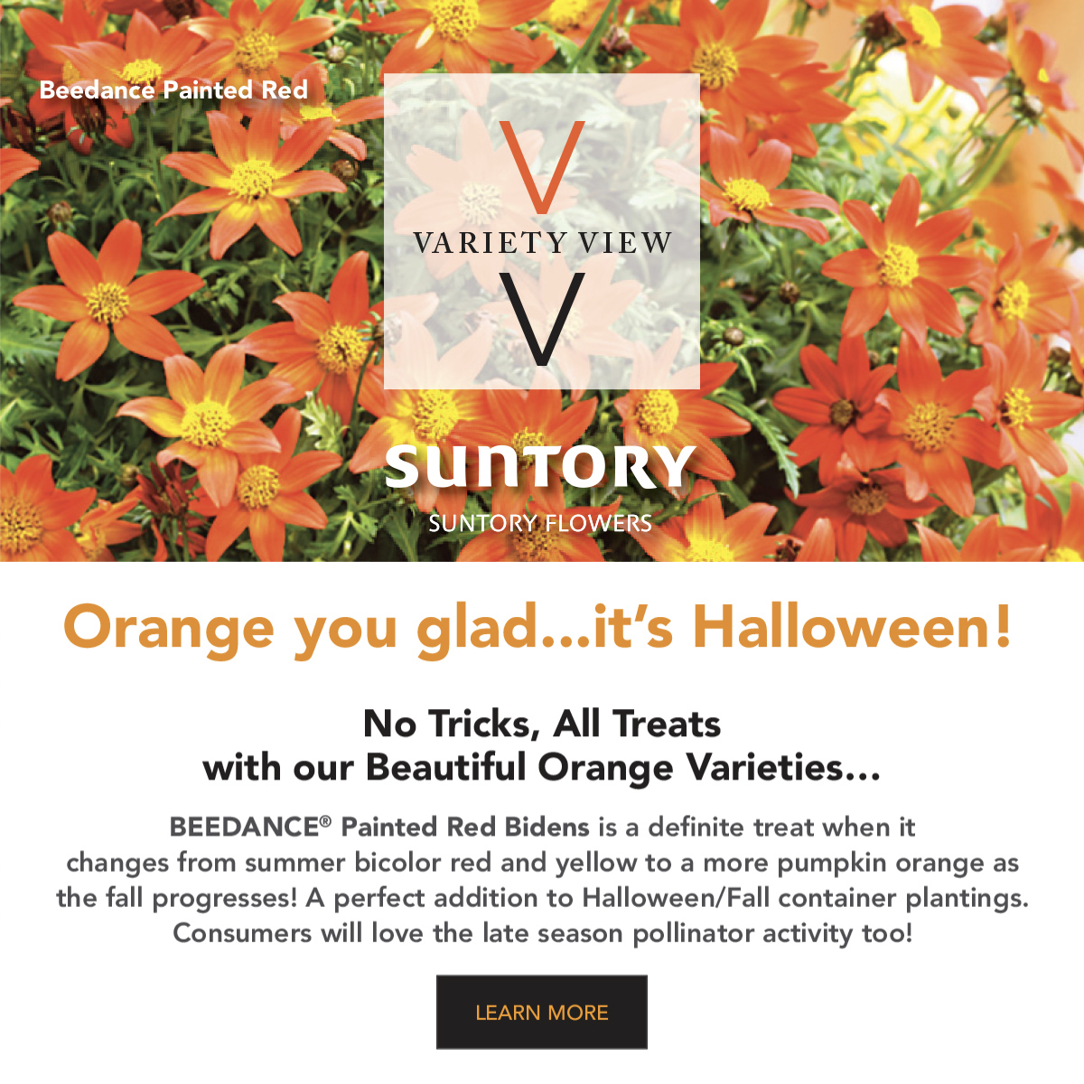 Suntory Flowers variety view - happy halloween