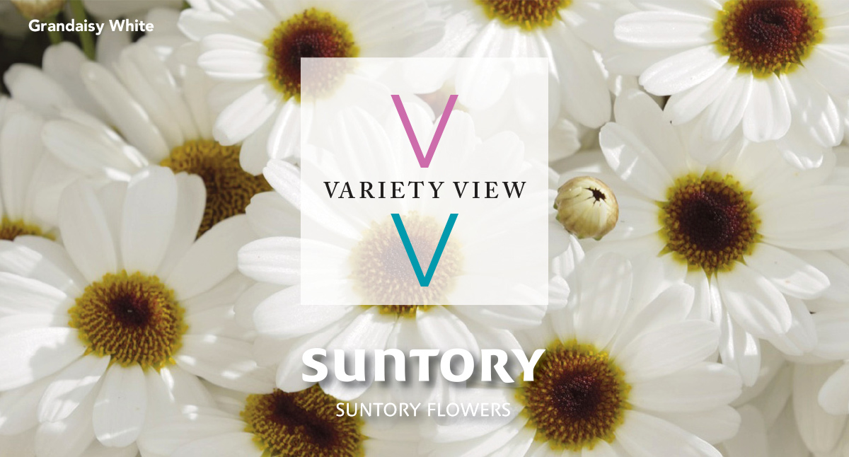 Happy Thanksgiving from Suntory FLowers