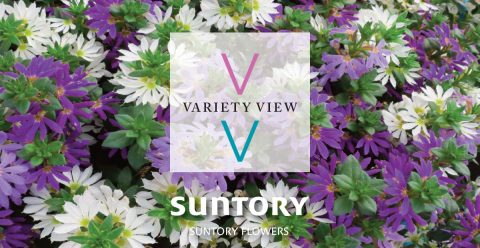 Suntory Flowers Variety View – Extend Your Season with Surdiva