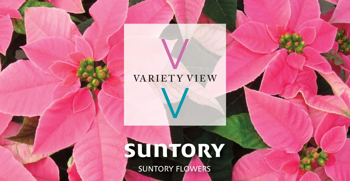 Suntory Flowers Variety View – Time to Rebook Princettia!