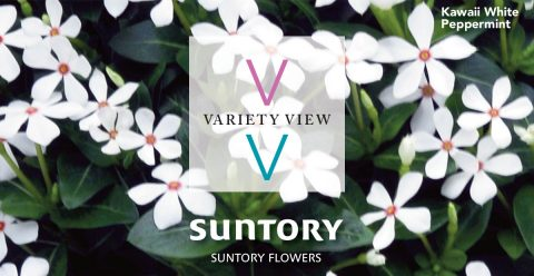 Suntory Flowers Variety View – Time to Book Summer Crops