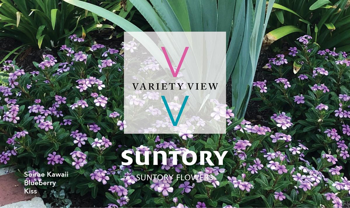 Suntory Flowers Variety View newsletter header image