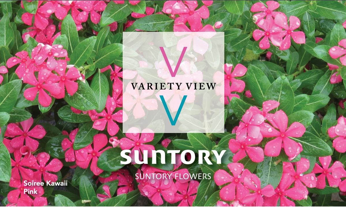Suntory Flowers Variety View Soiree Kawaii newsletter header image