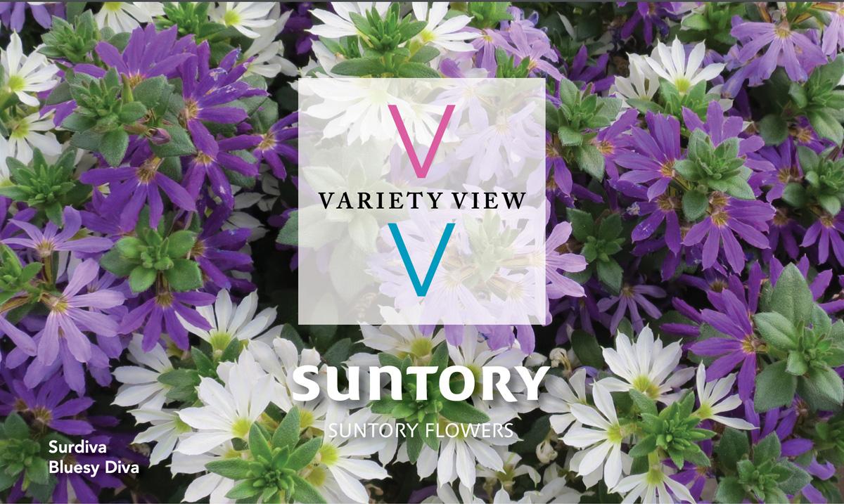 Suntory Flowers Variety View newsletter header image Surdiva Summer Combos