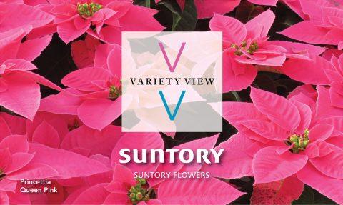 Suntory Flowers Variety View – Princettia Trials Highlights