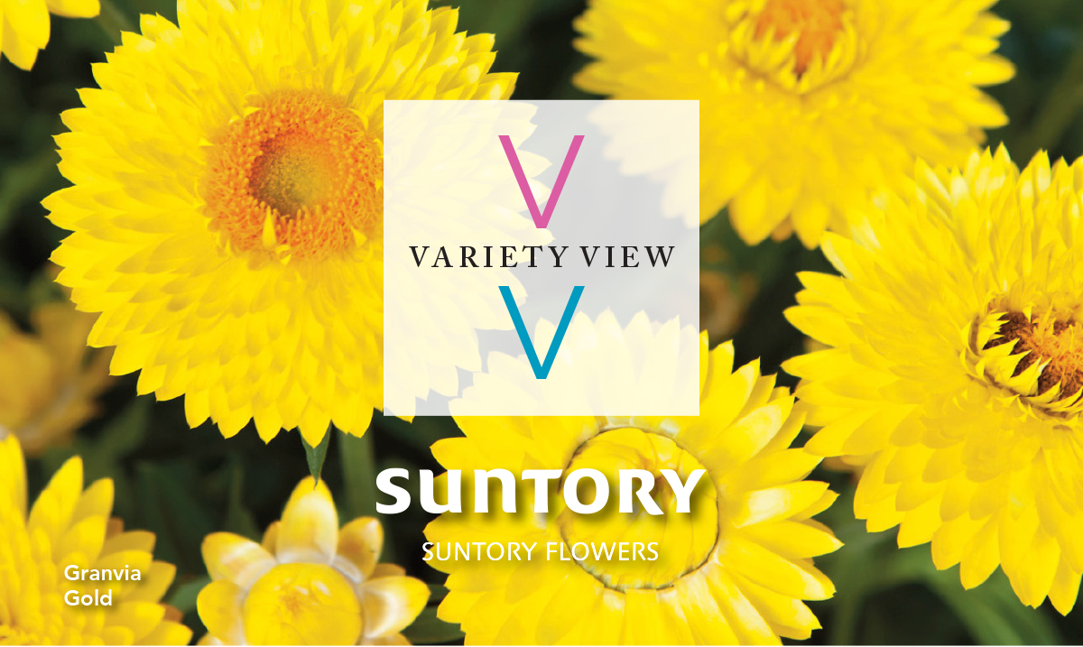 Suntory Flowers Variety View newsletter header image