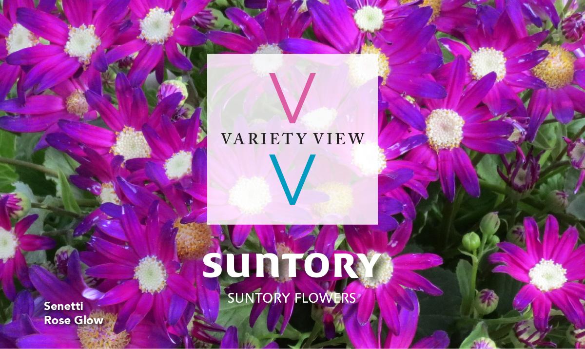 Variety View newsletter header